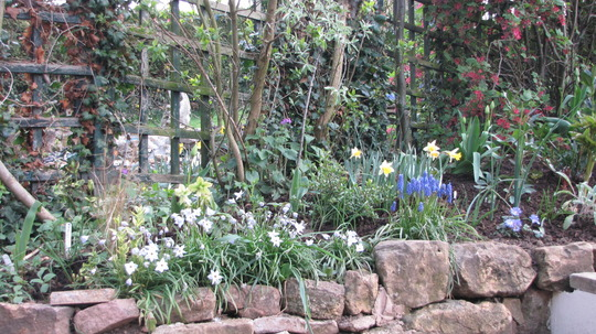 Side border filling up nicely. (Chionodoxa luciliae (Glory of the snow))