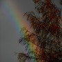 Rainbow through trees