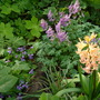 a nice mingle (Hyacinthus orientalis (Hyacinth))