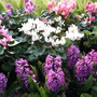 Spring Spectrum..