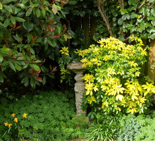The Bird bath in the Bottom garden