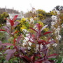 Photinia_amelanchier_gorse_and_bench