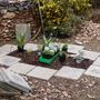 rabbit testing new plants (Cornish hedge under construction)
