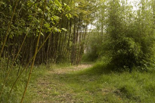 Warmer bamboo