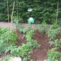 A boring vegetable patch but we hope to have lots of yummy veggies!