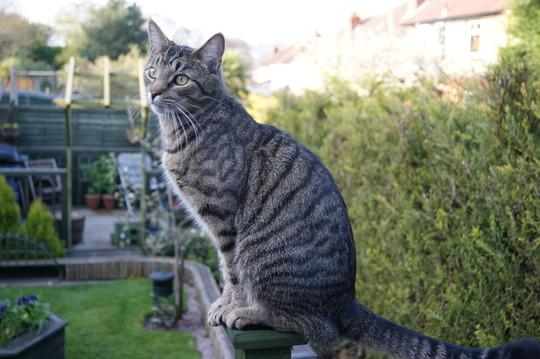 Spike in the garden.