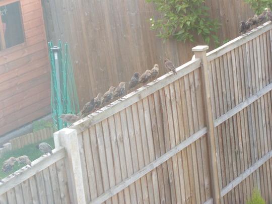 Birds - After Their Feast!