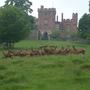 deer at powis castle