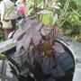 botanical garden of wales