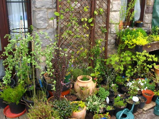 Pots around the small trellis