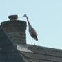 Heron looking for mischief