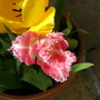 Rhubarb_003