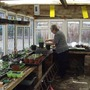 lucy busy in allotment