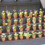 Auriculas_and_herb_garden_014