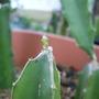 April_garden_2011_002