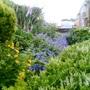 F_garden_21
