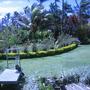 Dendrobium blooms