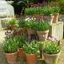 Rousham_gardens_april_16_2011_044