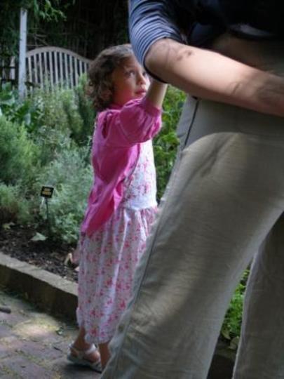 Little Dutch Girl in the Walled Herb Garden