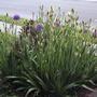 2008_06_03_iris_garden