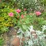 Belle_au_bois_dormant_11._sl_beauty