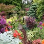 Lower_garden_1_june
