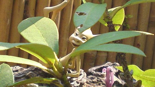 Fuddleduck the garden Pixie
