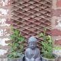 Sweetpea Bhudda