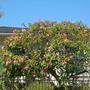 Neighborhood_plants_001