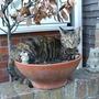 Cat nip or is it Cat nap