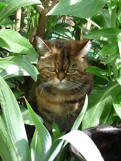 Poppy - My garden girl.