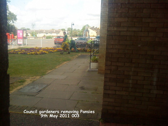 Council gardeners removing Pansies 09-05-2011 003