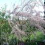 Garden_in_may_006
