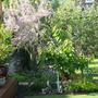 Garden_in_may_012