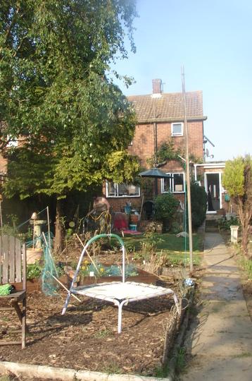 Garden from back