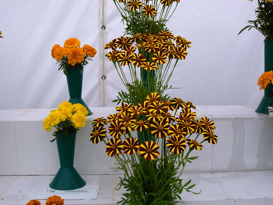 Vases at Shrewsbury flower show 2007