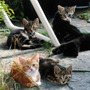 Kittens_on_the_terrace