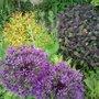 Spirea, Allium, Purple Sage & Nigella