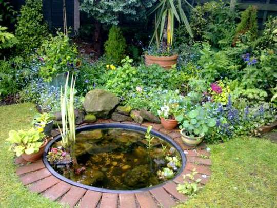 My Little Pond Area is Filling out