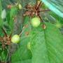 Oooooo cherries!!!