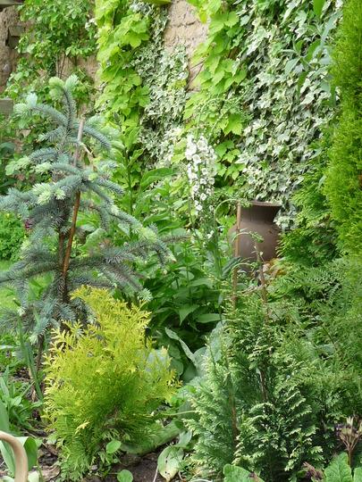 Garden greens 2 (Thuja)