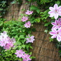 Garden_may_14th_2011_001