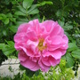 Rosa Therese Bugnet