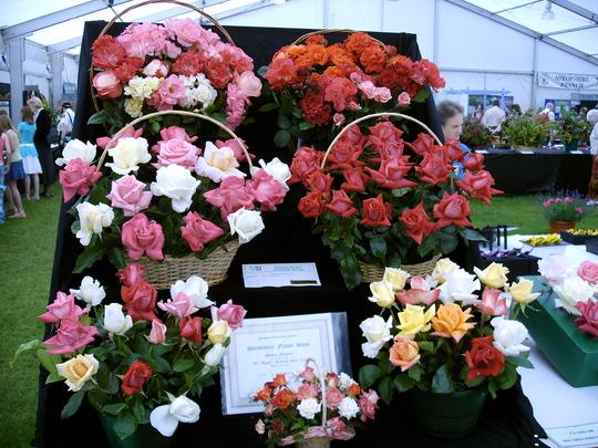 Shrewsbury flower show 2007