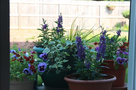 Flower pots 2011