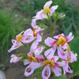 _ay_flowers_010