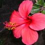 _ay_flowers_034