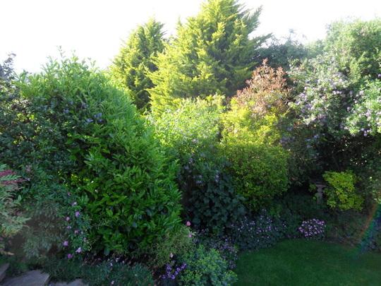 The Bottom garden late evening