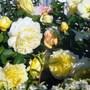 Roses_pilgrim_evelyn_a