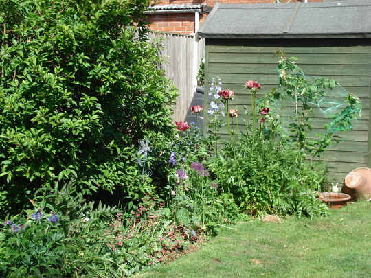 Border near shed with Cherry tree